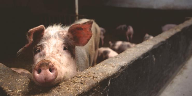 Biovoeding dieren